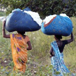 Fair Trade bomullsodling